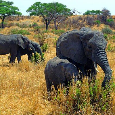 kilimanjaro-safari