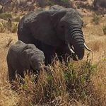 kilimanjaro-climbing-compan-3-day-safari