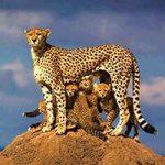 kilimanjaro-climbing-company-2-day-safari-200